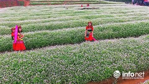 Ngỡ ngàng vẻ đẹp mê hồn của vườn hoa tam giác mạch ở miền Tây xứ Nghệ - 8