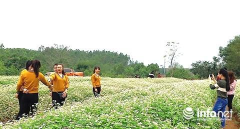 Ngỡ ngàng vẻ đẹp mê hồn của vườn hoa tam giác mạch ở miền Tây xứ Nghệ - 6