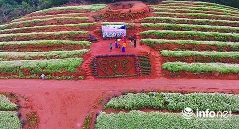 Ngỡ ngàng vẻ đẹp mê hồn của vườn hoa tam giác mạch ở miền Tây xứ Nghệ - 7