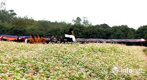Ngỡ ngàng vẻ đẹp mê hồn của vườn hoa tam giác mạch ở miền Tây xứ Nghệ - 10