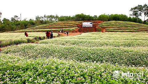 Ngỡ ngàng vẻ đẹp mê hồn của vườn hoa tam giác mạch ở miền Tây xứ Nghệ - 5