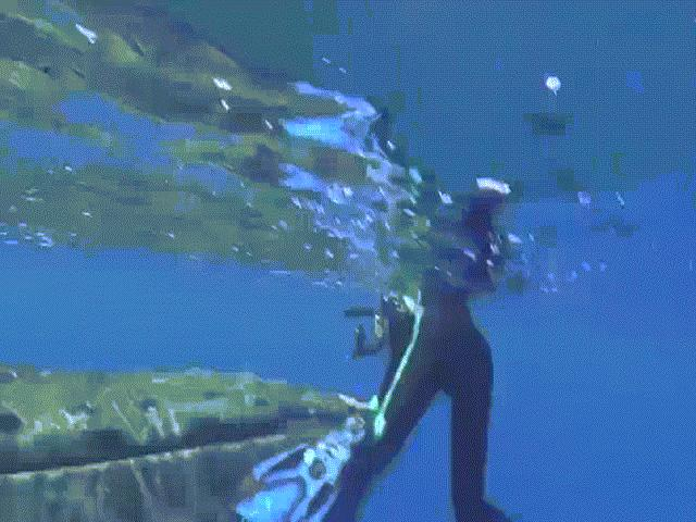 Kinh ngạc cá voi sát thủ bắt chước người, nói tiếng Anh - 2