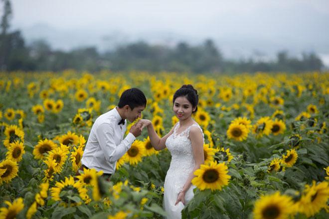 Tới xứ Nghệ ghé thăm cánh đồng hoa hướng dương miễn phí tham quan - 9
