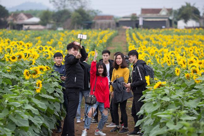 Tới xứ Nghệ ghé thăm cánh đồng hoa hướng dương miễn phí tham quan - 10