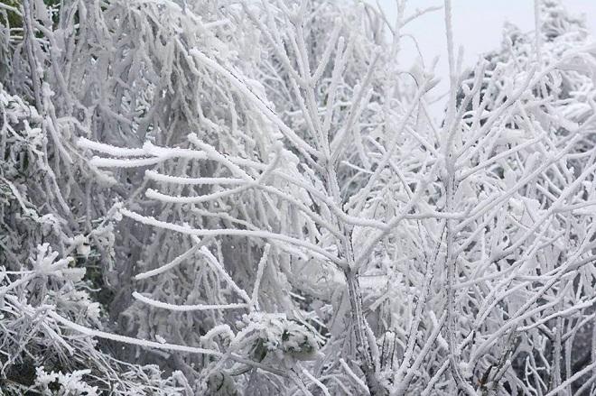 Rét khủng khiếp, cây cối hóa đá trên đỉnh Mù Cang Chải - 5