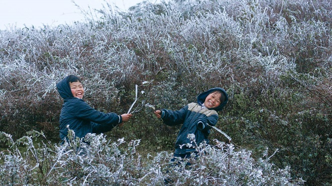 Rét khủng khiếp, cây cối hóa đá trên đỉnh Mù Cang Chải - 10