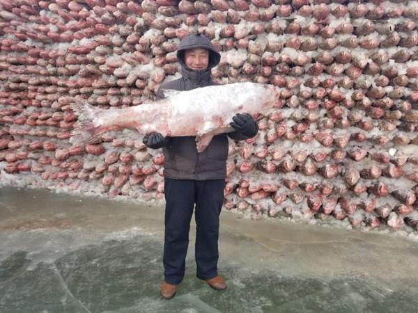 Du khách đổ xô chiêm ngưỡng bức tường cá lạ lùng giữa hồ băng - 9
