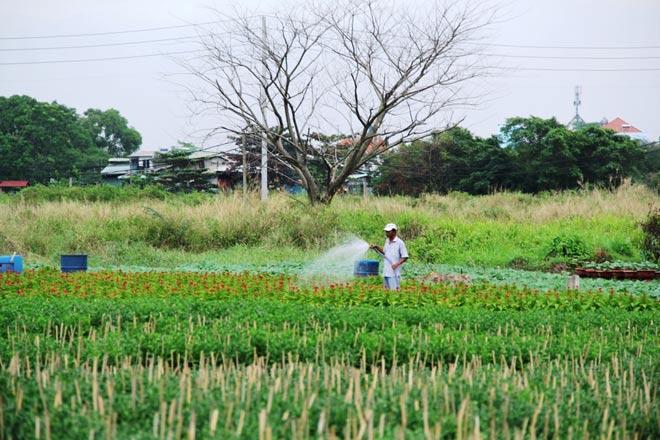 """Ngàn hoa chớm nụ tại nơi """"sản xuất đồ chơi Tết"""" lớn nhất Sài Gòn"""