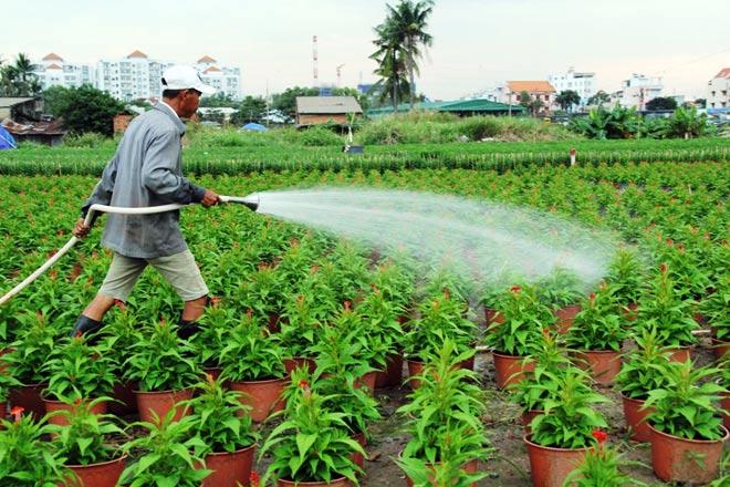 """Ngàn hoa chớm nụ tại nơi """"sản xuất đồ chơi Tết"""" lớn nhất Sài Gòn - 12"""