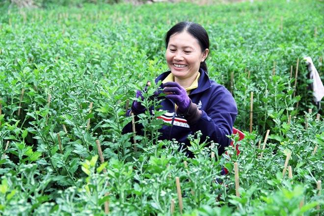 """Ngàn hoa chớm nụ tại nơi """"sản xuất đồ chơi Tết"""" lớn nhất Sài Gòn - 8"""