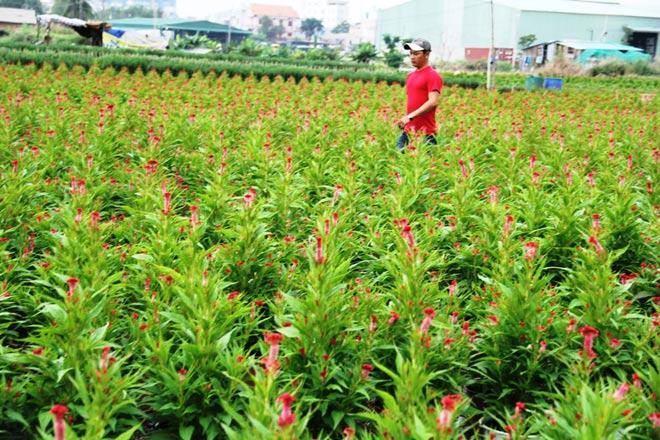 """Ngàn hoa chớm nụ tại nơi """"sản xuất đồ chơi Tết"""" lớn nhất Sài Gòn - 14"""