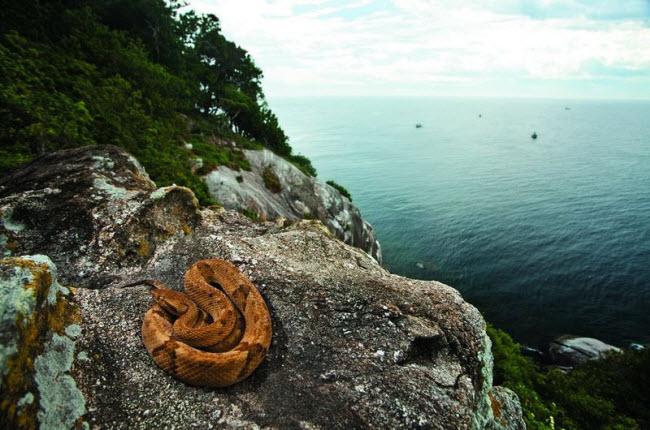 Tim đập chân run khám phá hòn đảo toàn rắn độc - 2
