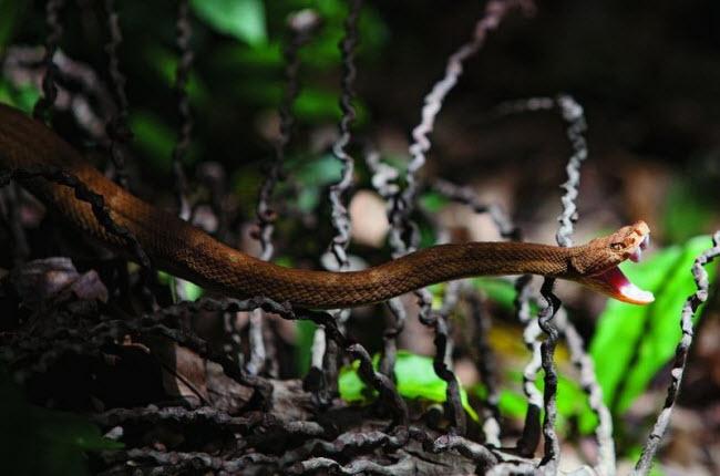 Tim đập chân run khám phá hòn đảo toàn rắn độc - 7