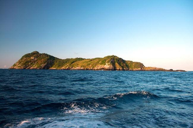 Tim đập chân run khám phá hòn đảo toàn rắn độc - 1