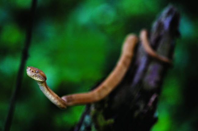 Tim đập chân run khám phá hòn đảo toàn rắn độc - 4