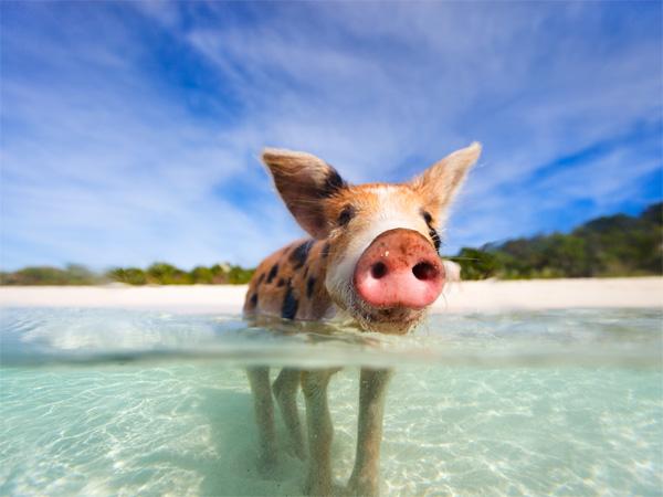 """""""Lịm tim"""" ngắm những bãi biển nước sạch nhất thế giới - 6"""