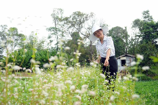 Ngỡ ngàng hoa tam giác mạch ở Hà Giang khoe sắc tại Sài Gòn - 10