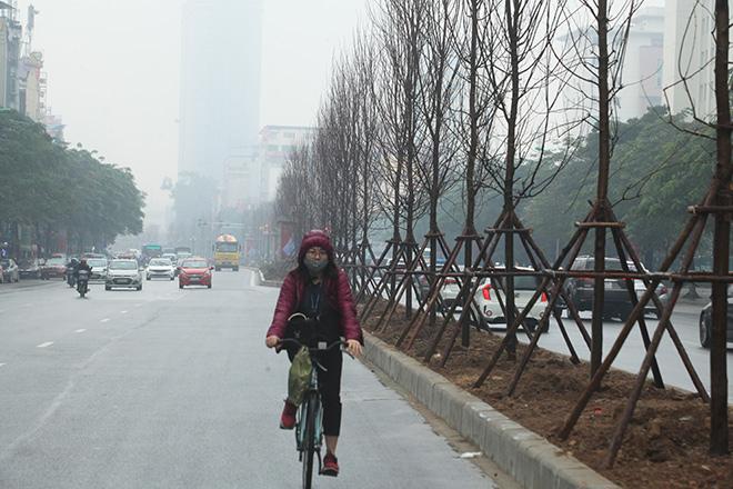 Hàng phong lá đỏ châu Âu đã xuất hiện trên đường phố Hà Nội