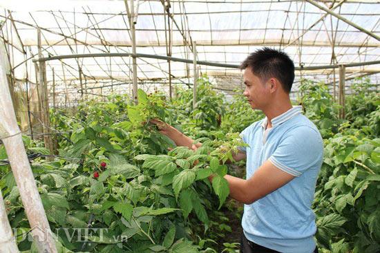 """Bỏ lương 7 triệu, về quê trồng """"siêu thực phẩm"""", thu gần 1 tỷ - 1"""