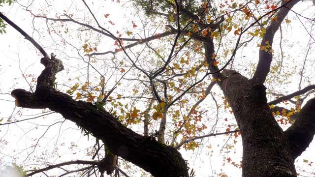 Ít người biết, ngay gần Hà Nội đã có rừng phong lá đỏ - 3