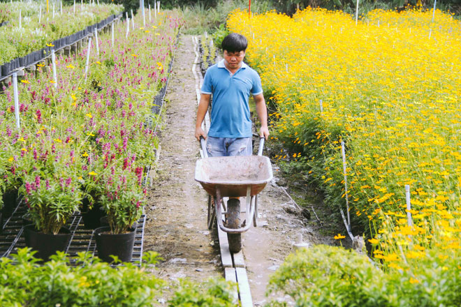 Không thể tin nổi giữa Sài Gòn có cánh đồng hoa đẹp đến thế! - 3