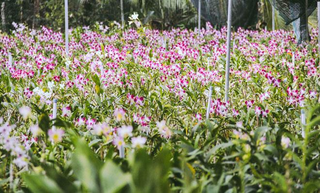 Không thể tin nổi giữa Sài Gòn có cánh đồng hoa đẹp đến thế! - 5