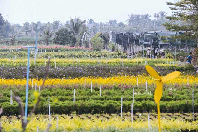 Không thể tin nổi giữa Sài Gòn có cánh đồng hoa đẹp đến thế! - 7