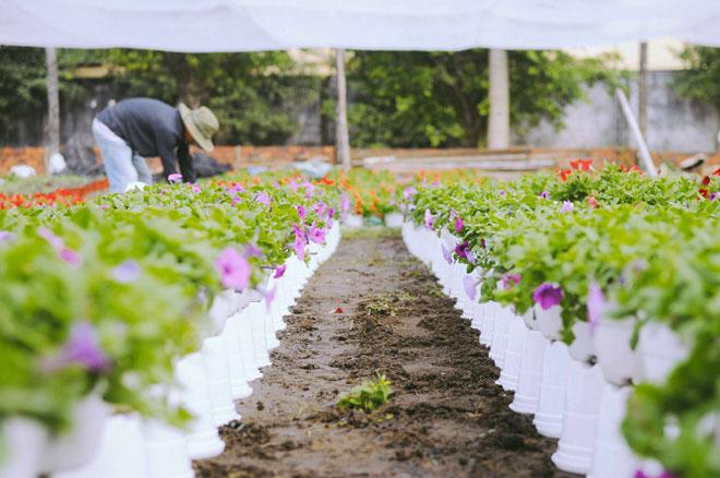 Không thể tin nổi giữa Sài Gòn có cánh đồng hoa đẹp đến thế! - 14