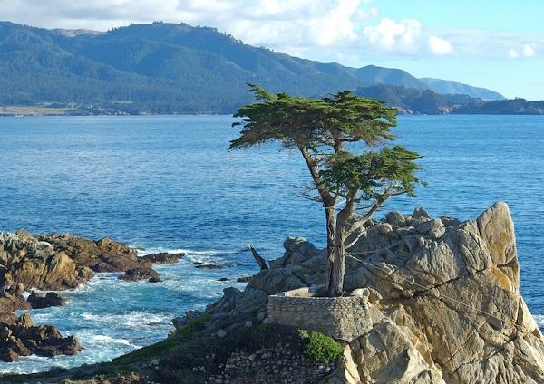 Kỳ lạ những điểm du lịch hút khách đến thăm chỉ vì… 1 cái cây - 5