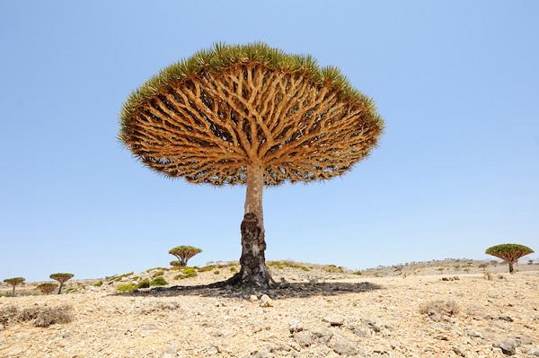Kỳ lạ những điểm du lịch hút khách đến thăm chỉ vì… 1 cái cây - 7