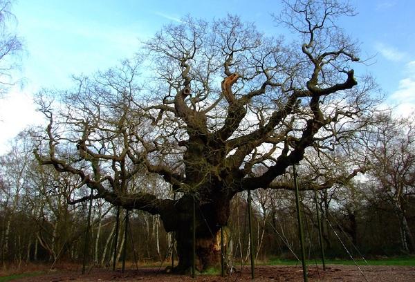 Kỳ lạ những điểm du lịch hút khách đến thăm chỉ vì… 1 cái cây - 4