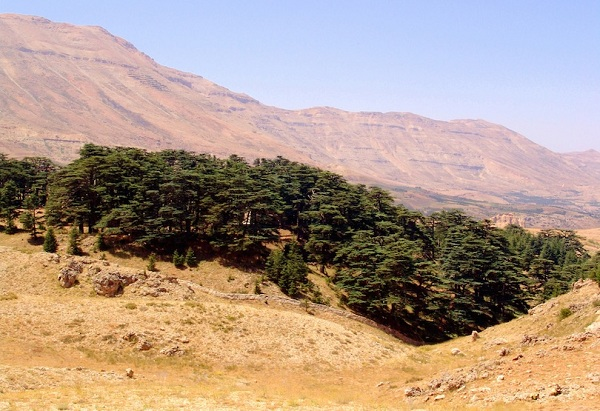 Kỳ lạ những điểm du lịch hút khách đến thăm chỉ vì… 1 cái cây - 9