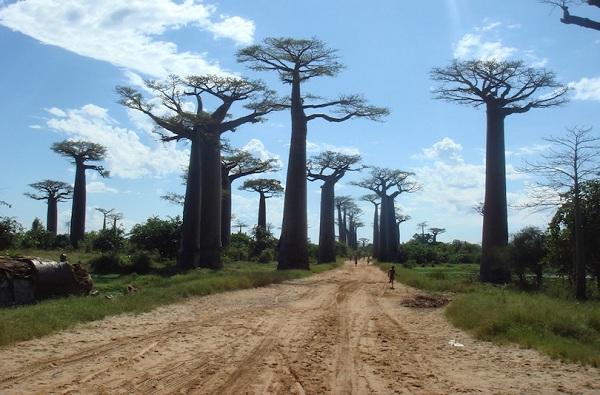 Kỳ lạ những điểm du lịch hút khách đến thăm chỉ vì… 1 cái cây - 10