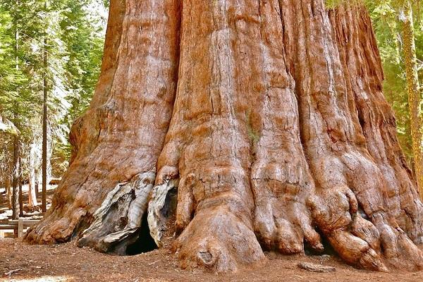 Kỳ lạ những điểm du lịch hút khách đến thăm chỉ vì… 1 cái cây - 8