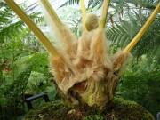 Tin tức sức khỏe - Bí mật về một loại cây quý ở Việt Nam giúp giảm tiểu đêm - Phòng nguy cơ suy thận