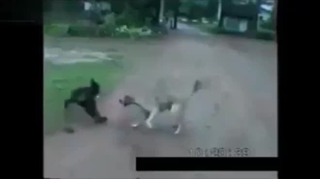 """Chết cười với những chú khỉ """"lầy lội"""""""