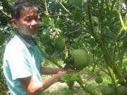 Thị trường - Tiêu dùng - Cận Tết, giá trái cây đặc sản ở miền Tây cao ngất ngưởng