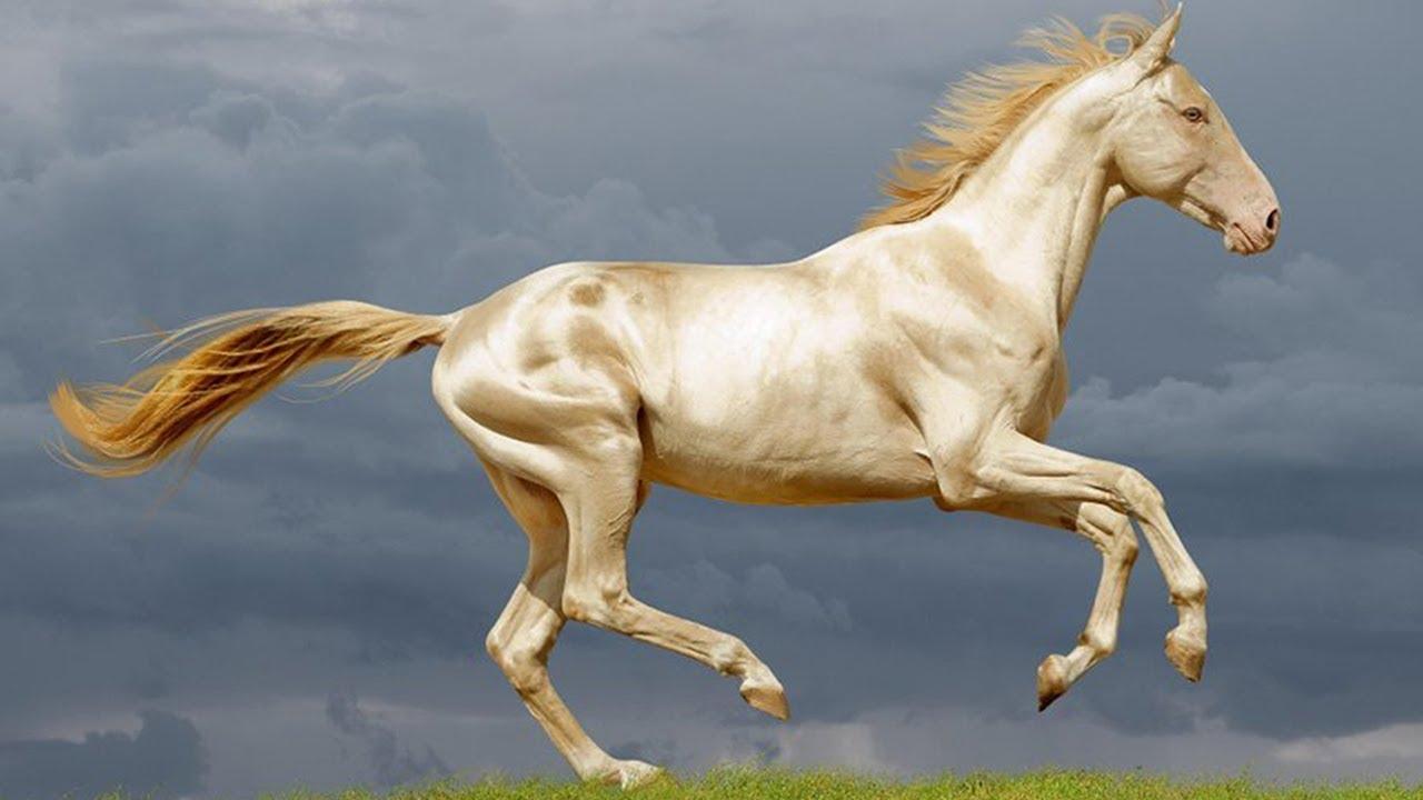 TQ: Bỏ 300 triệu USD mua ngựa quý huyền thoại