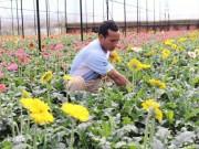 Thị trường - Tiêu dùng - Chăm hoa bán Tết: Trồng 30.000 cây đồng tiền có liền 15 triệu/tháng