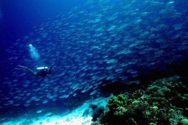 """10 đảo san hô đẹp nhất thế giới khiến du khách """"quên cả lối về"""" - 3"""