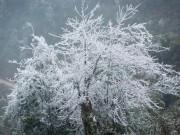 Tin tức trong ngày - Tiếp tục hứng không khí lạnh mạnh, Mẫu Sơn xuống còn -1 độ C