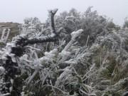 Tin tức trong ngày - Lạnh -1,4 độ C, băng giá phủ trắng đỉnh Mẫu Sơn