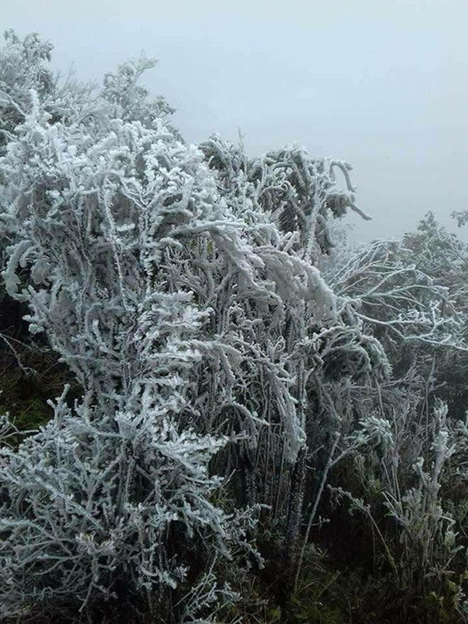 Du khách thích thú ngắm tuyết rơi trên đỉnh Mẫu Sơn - 9
