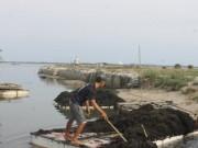 """Thị trường - Tiêu dùng - """"Lộc biển"""" bất ngờ xuất hiện sớm, ngư dân Khánh Hòa trúng đậm"""