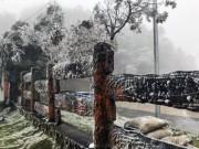 Tin tức trong ngày - Clip: Mưa tuyết rơi phủ trắng núi rừng Sa Pa