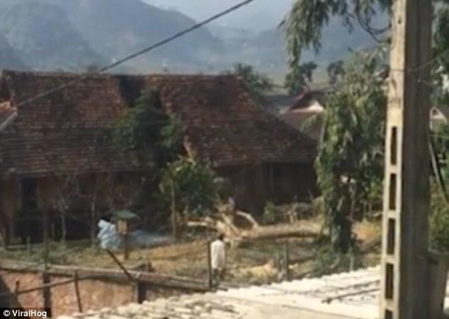 Báo nước ngoài đăng cảnh cây bị cưa đổ