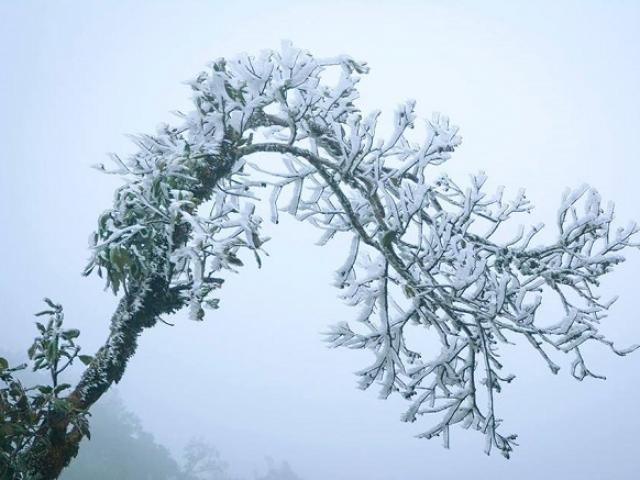 Không khí lạnh tăng cường, miền Bắc chìm trong rét đậm, rét hại