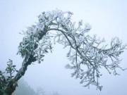 Tin tức trong ngày - Không khí lạnh tăng cường, miền Bắc chìm trong rét đậm, rét hại