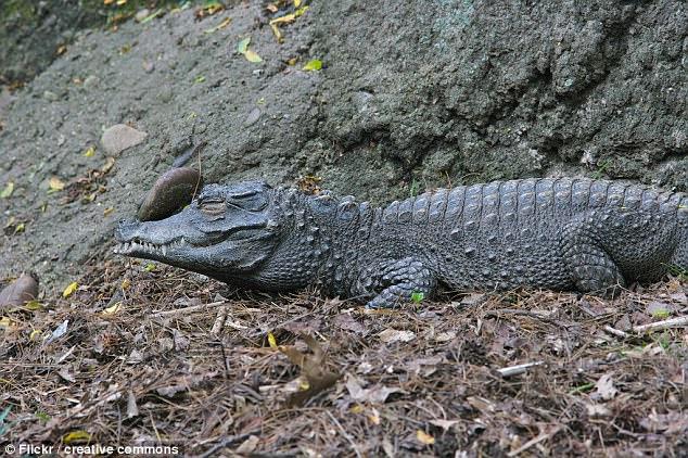 Thám hiểm hang động, phát hiện cá sấu đột biến kì lạ - 2