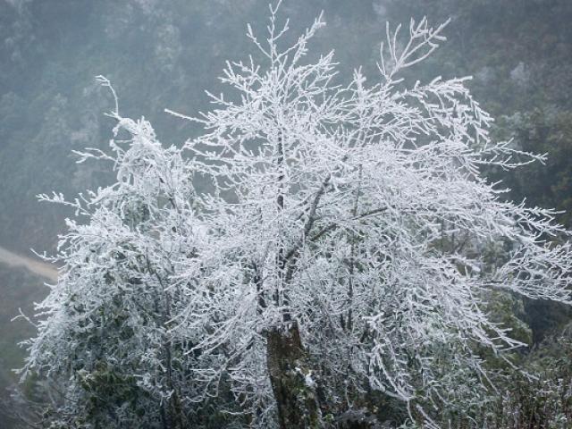 Mưa tuyết trắng trời có thể xảy ra ở Y Tý và Sa Pa vào đêm nay - 3